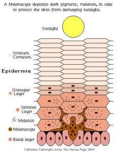 henna sunblock