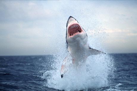 Shark Launch