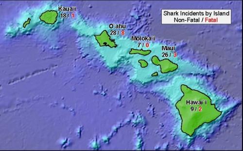 hawaii incidents shark attacks