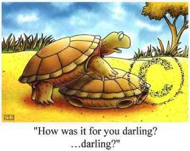 Sea Turtle Sex Cartoon