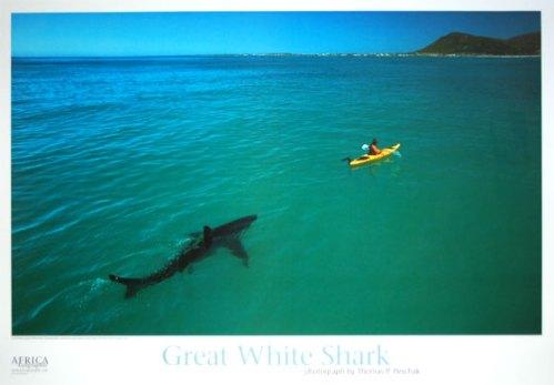 shark follows yellow kayak