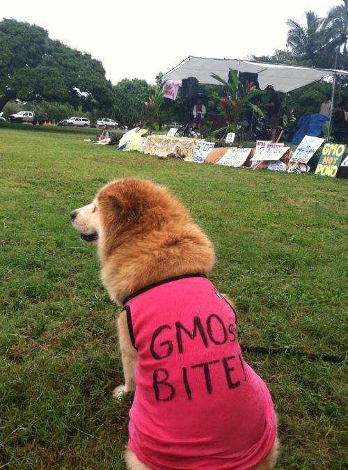 Dogs Animals GMOs Kauai Poipu
