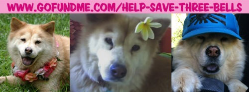 Help Save Three Bells Go Fund Me Hawaii Dog